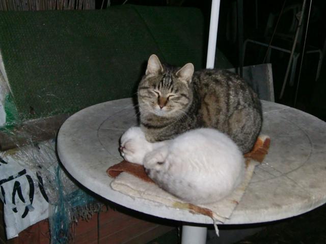 ニャんでオレが枕ニャんだヨ?