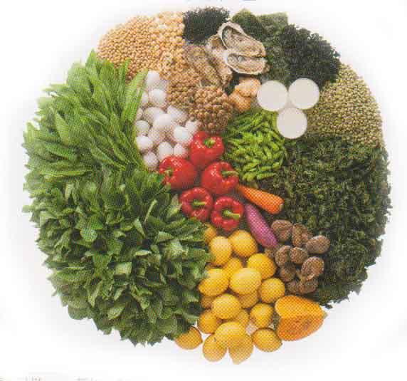 b.皮膚の栄養【タンパク質、糖、脂肪】