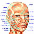 a.顔の筋肉の名称と働き